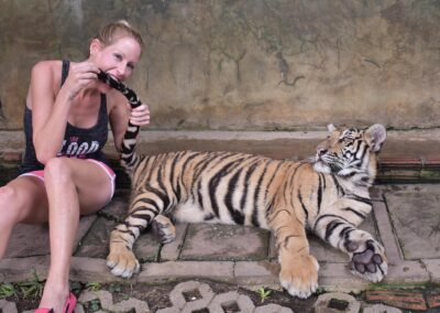 Rachelle Ginsberg Is Having Fun With A Tiger At Four Season Resort Chiang Mai At Amphoe Mae Rim, Thailand