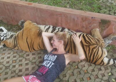 Rachelle Ginsberg Lying On A Tiger At Four Season Resort Chiang Mai In Amphoe Mae Rim, Thailand