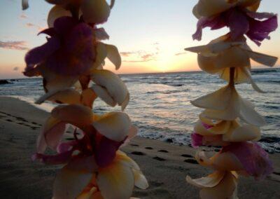 Wonderful Flowers At The Beach In Four Seasons Resort Hualalai, Kailua-Kona, Hi, United States